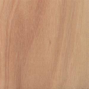 Eucalyptus - Lyptus