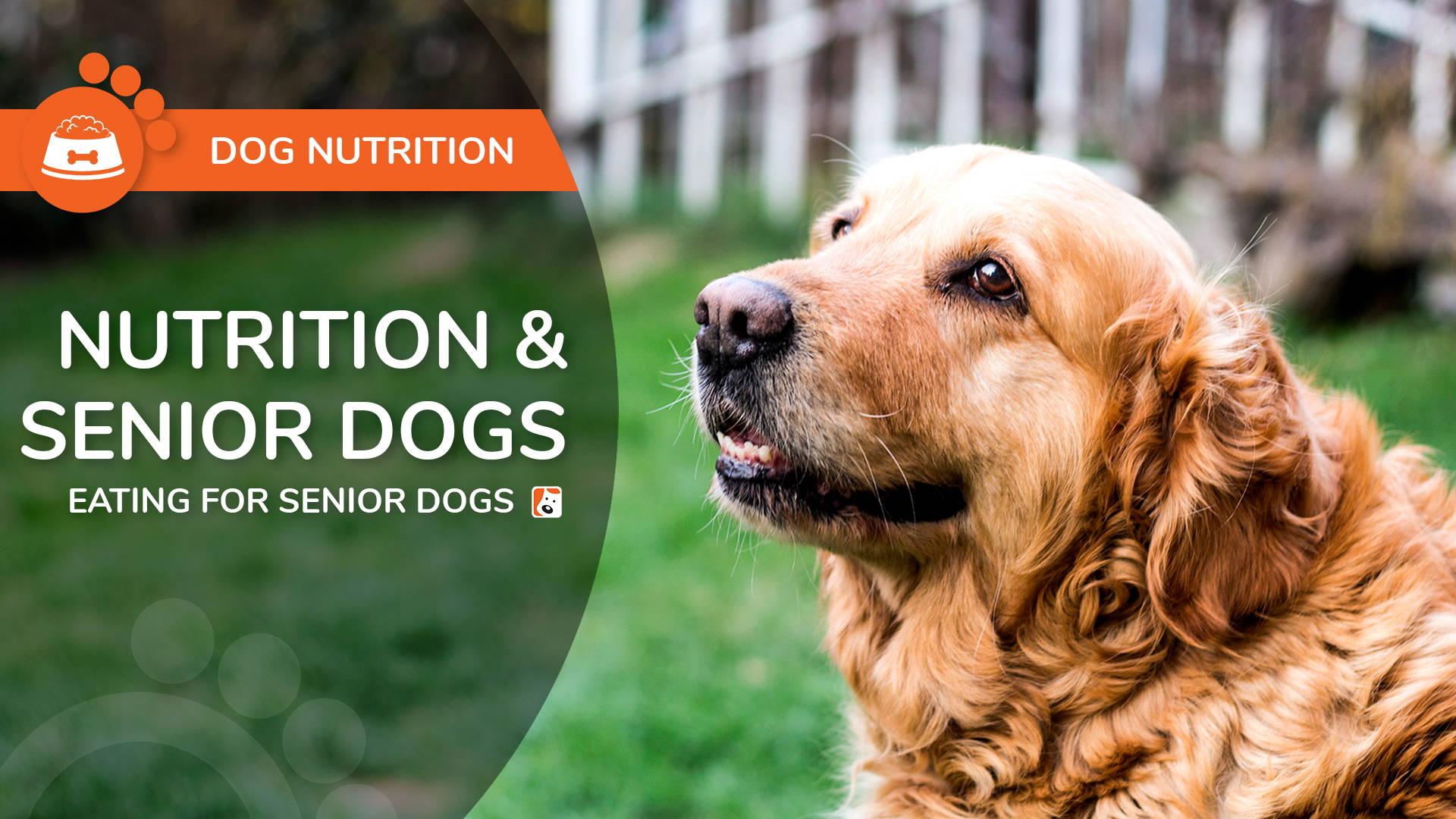 Nutrition for Older Dogs