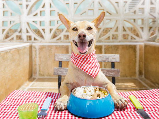 A dog with a bandana sits at a table with a bowl of food and silverware on each side