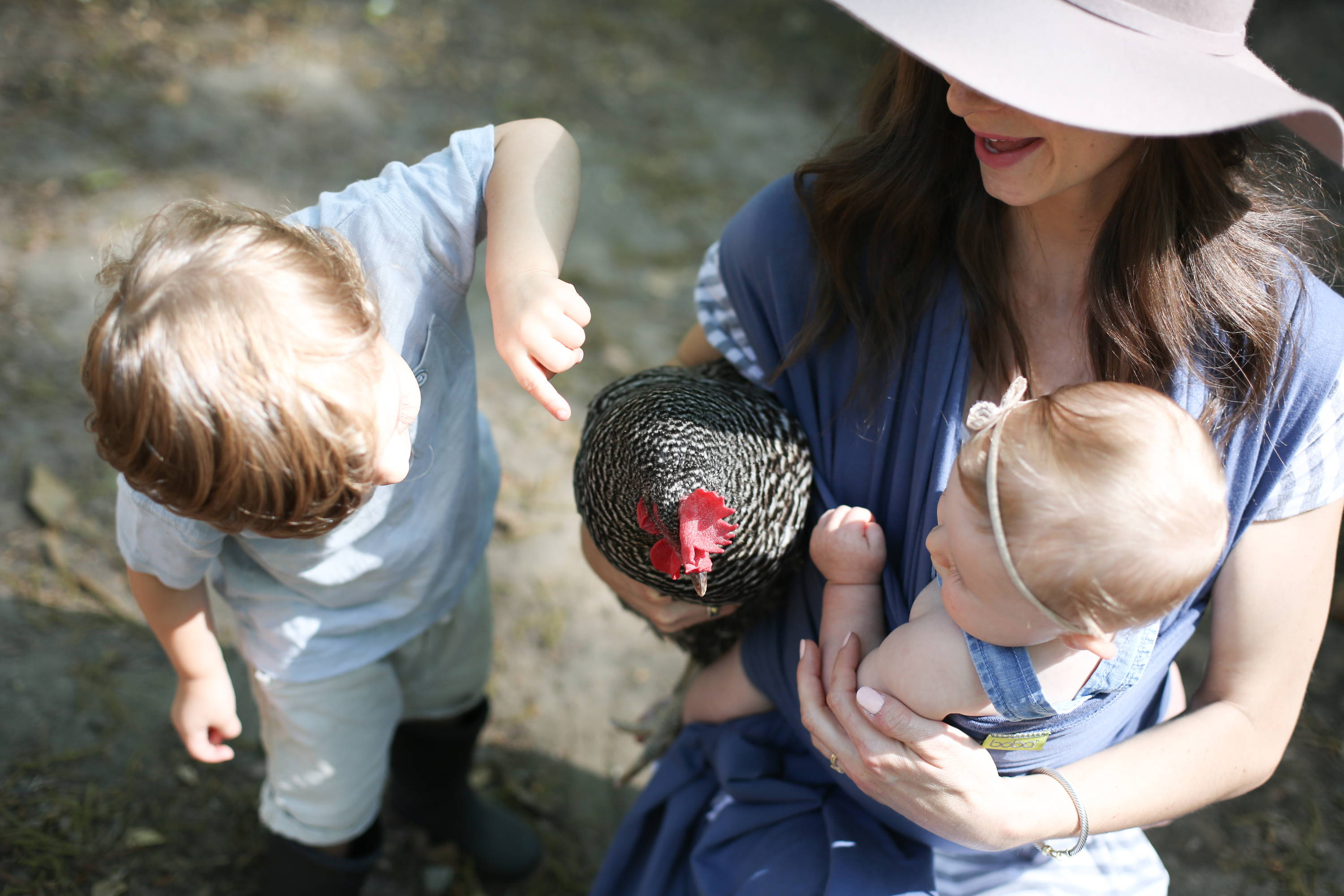 Mom having fun with a baby and toddler and their chicken at a farm