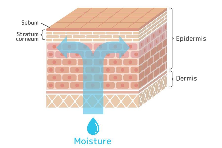 skin moisture barrier