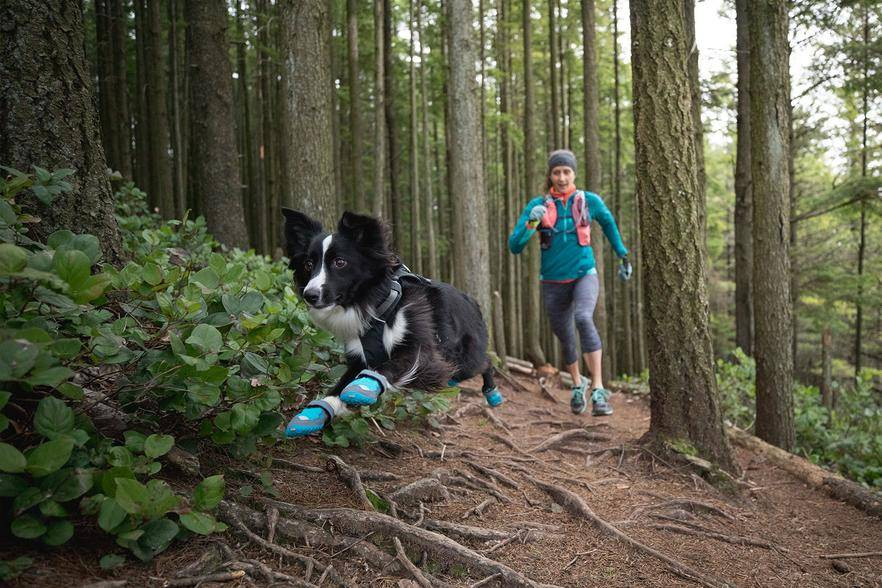 A dog running in the forest with their owner