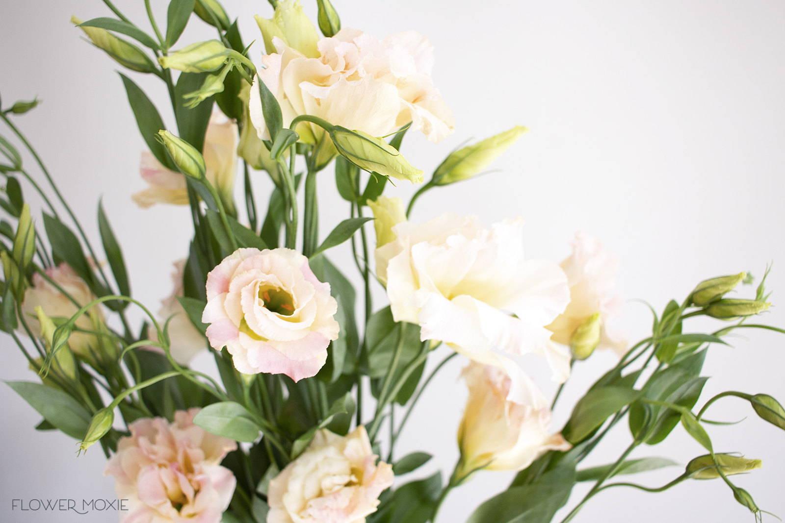 peach lisianthus flower
