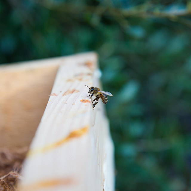 honeybee on a Bee Built hive