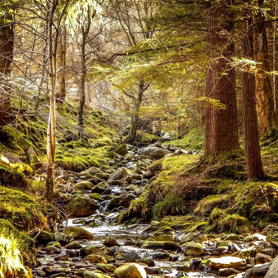 A native forest in ireland