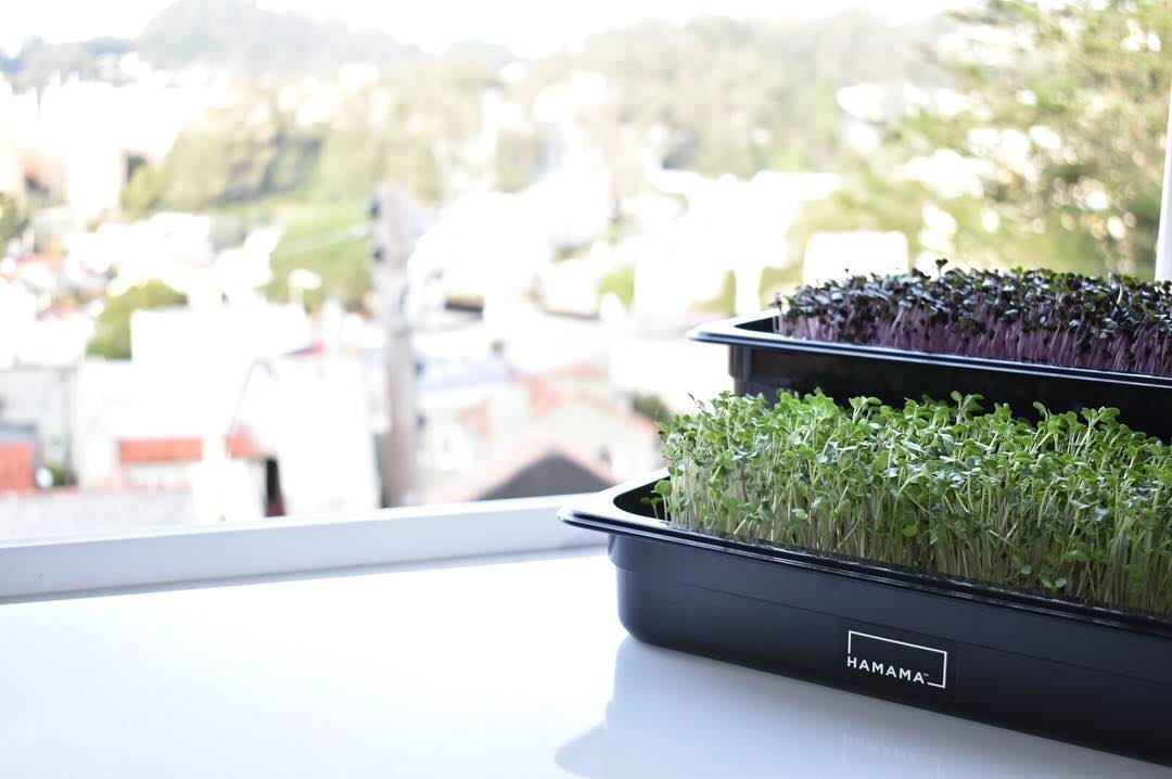 Grow nutritious greens year-round