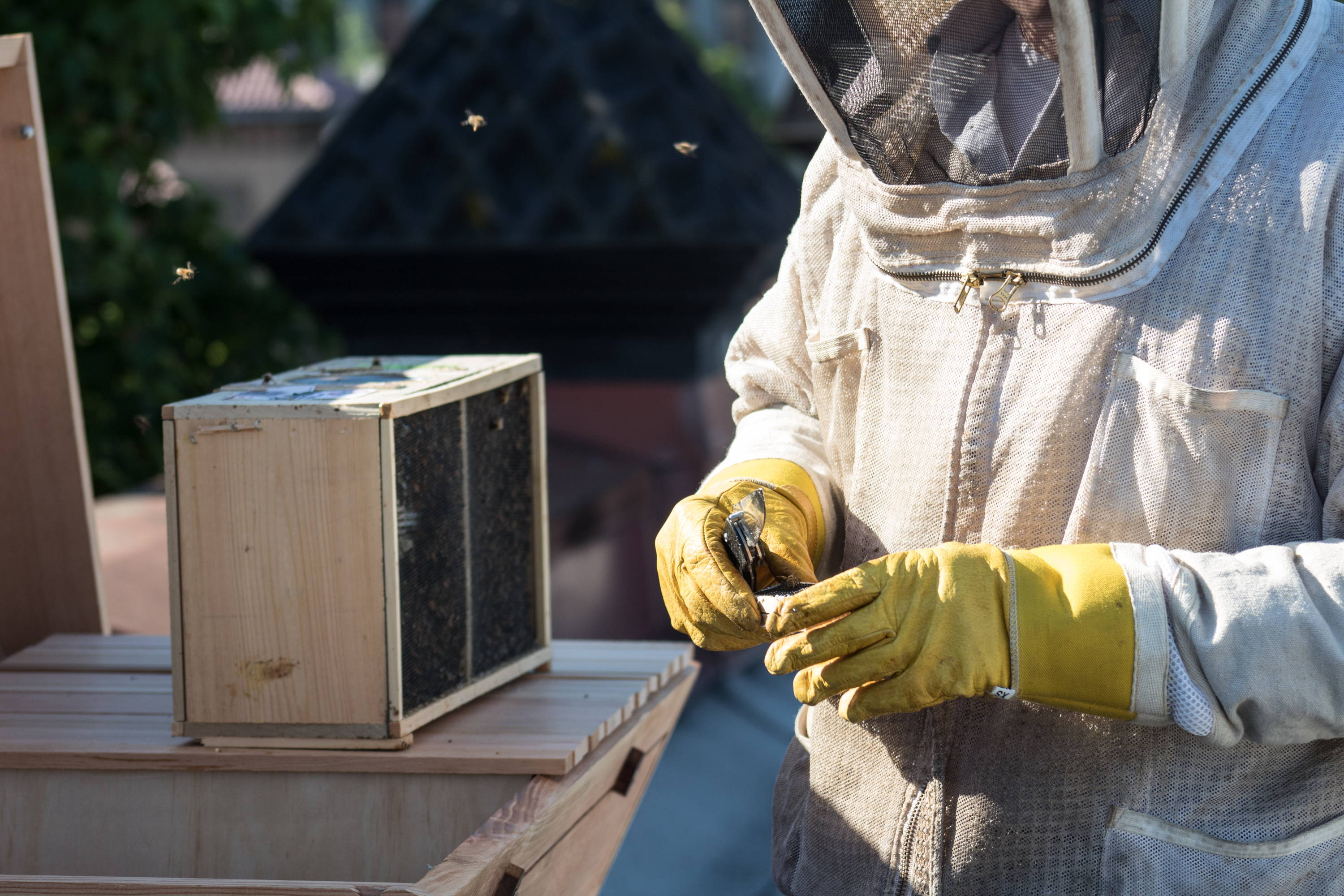 Photo of a beekeeper, Bee Built Top Bar Hive, and a bee package