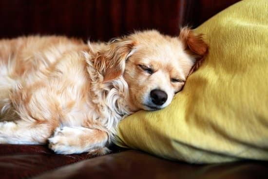 A tan dog lays its head down on a yellow pillow while sleeping