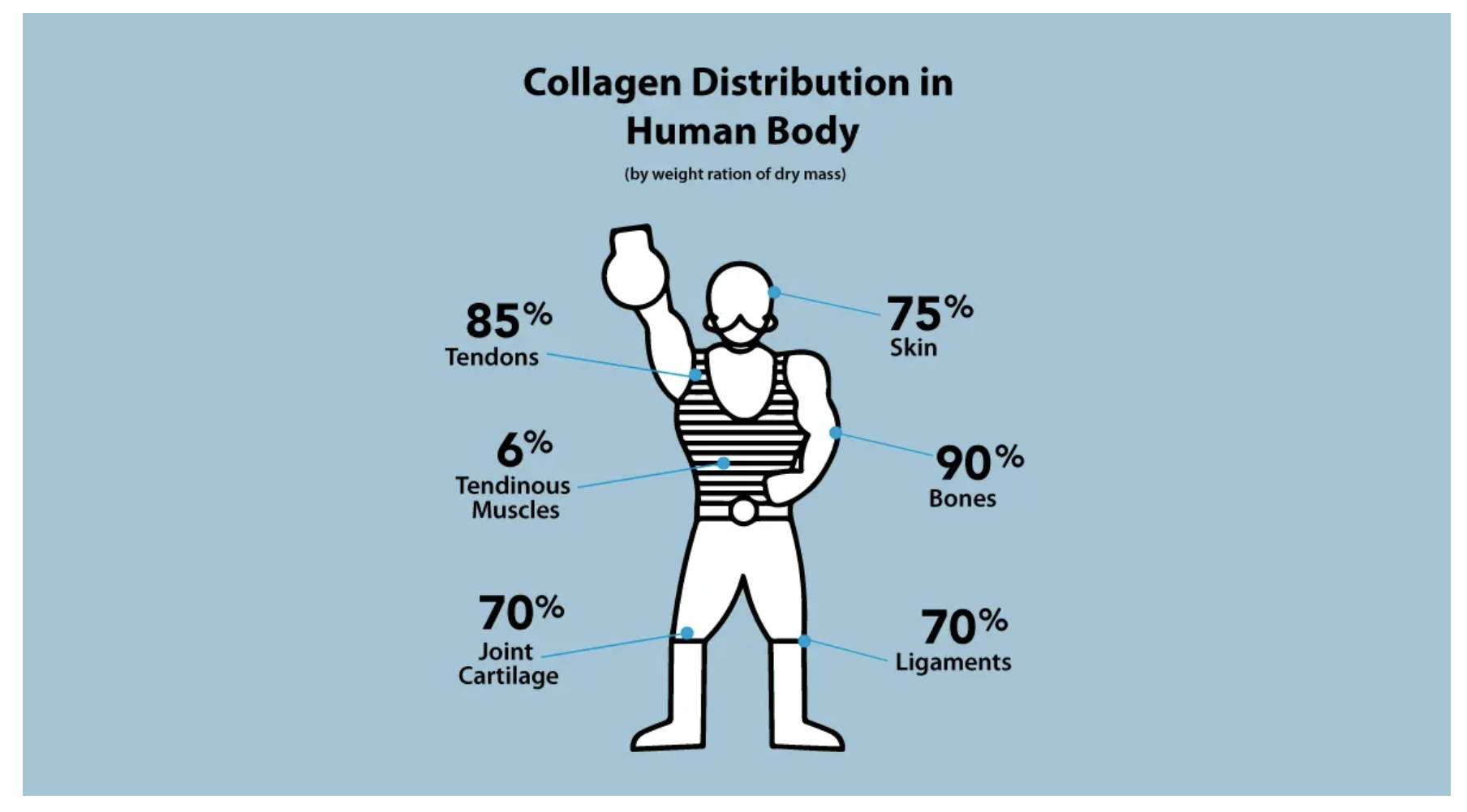 Amandean's Collagen Distribution in The Human Body