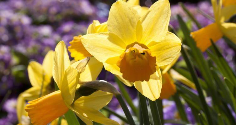 Bakker.com winnaar bloembollen test