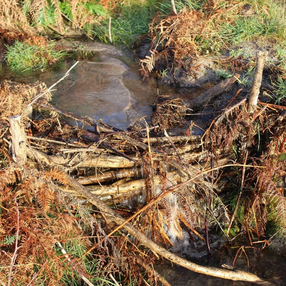 A man made dam in a stream built from fallen branches