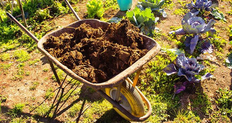 Nutrire e fertilizzare l'orto