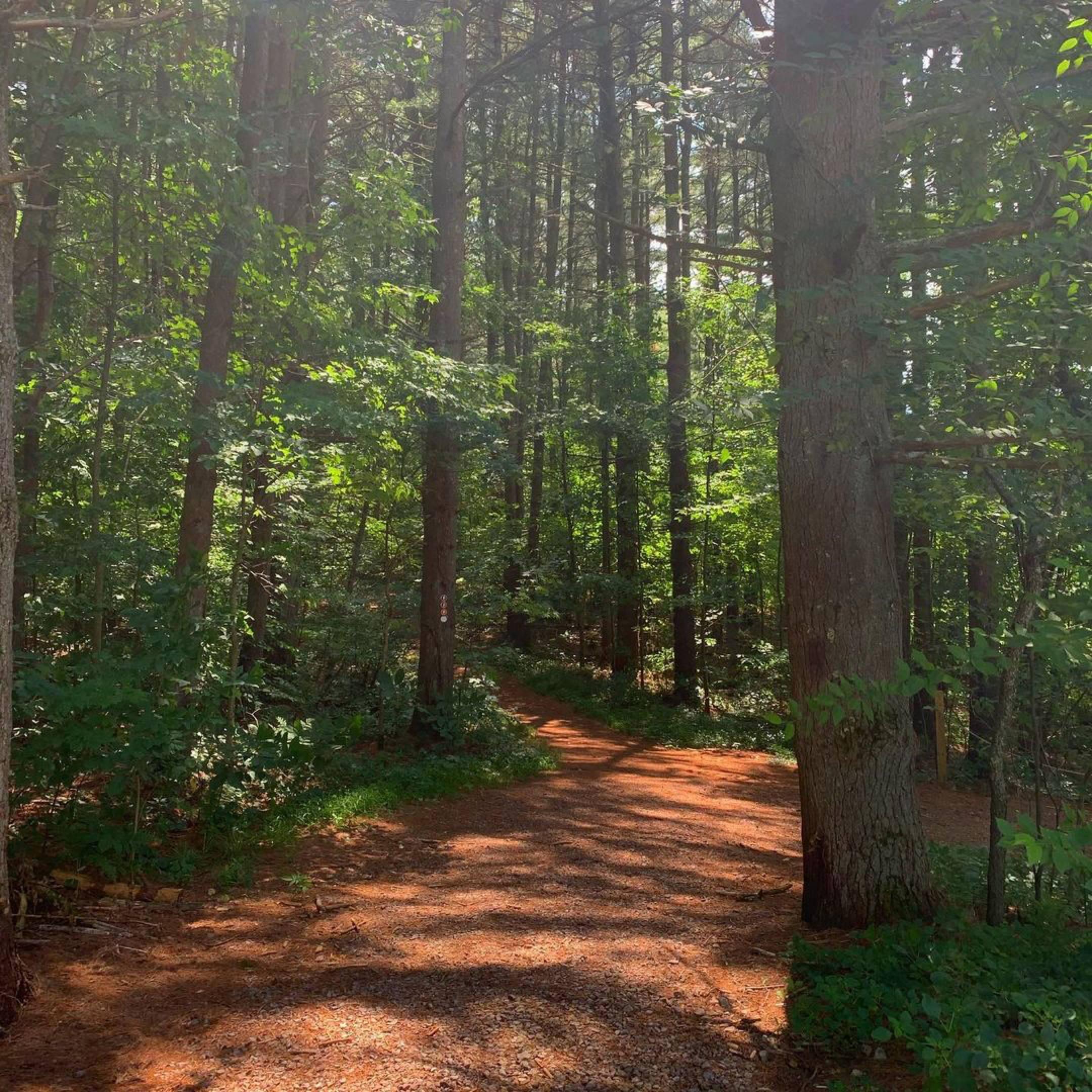 Bear Run Trail near Mill Run, Ohiopyle, and Fallingwater