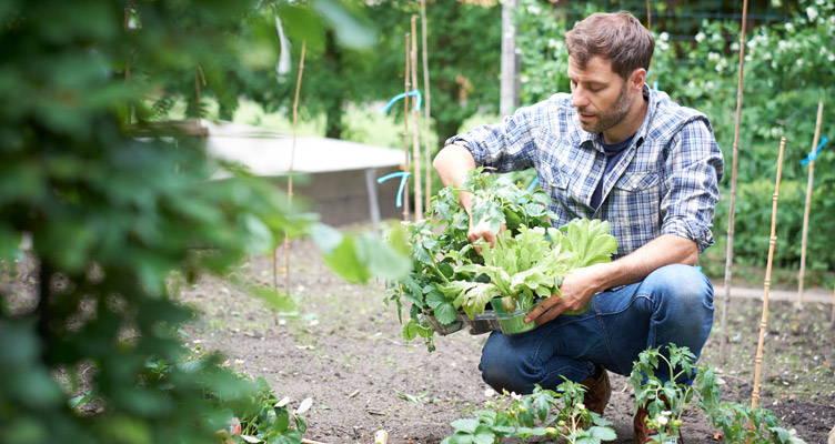 Einen Obst- und Gemüsegarten anlegen