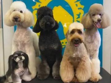 Bone Idol Academy | Getting Qualified | Asian Fusion | Dog Grooming