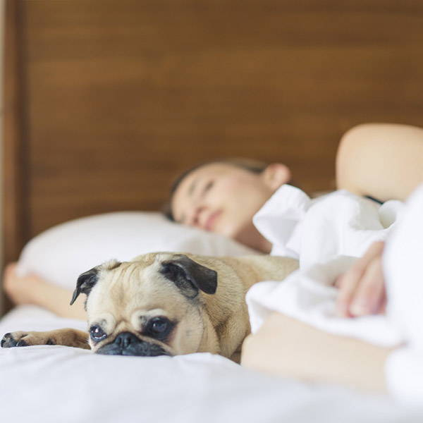 Woman with pug sleeping in bed