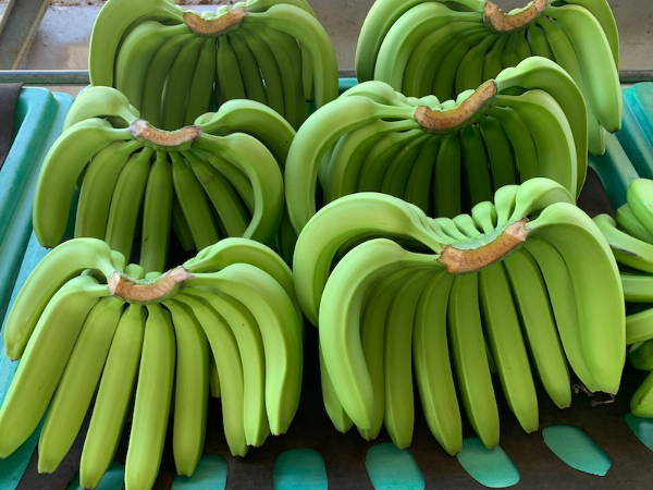 Banana health benefits: organic bananas