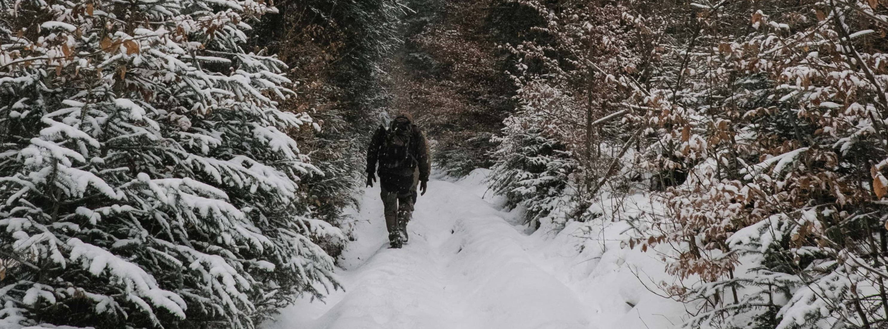 A field technician hikes up a snowy trail through the forest