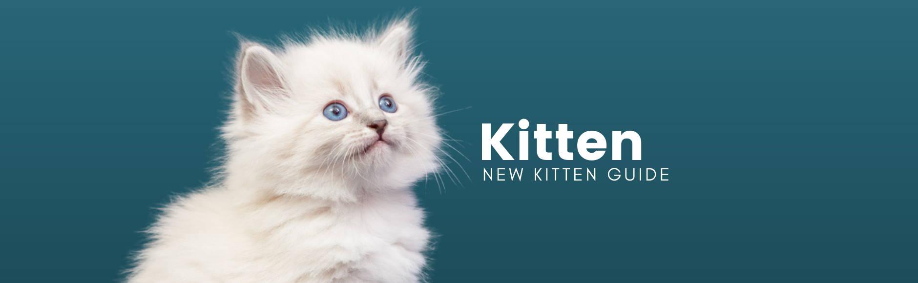 Kitten - New Kitten Guide