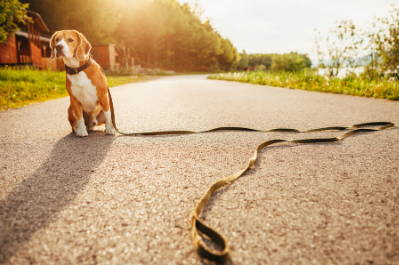 6 Things You Should Do If You Want To Find Your Lost Dog - Team K9