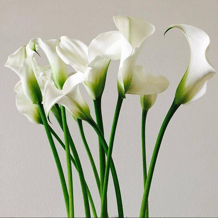 Calla lily wedding flower