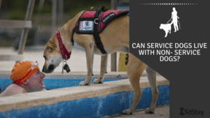 Can Service Dogs Live with non service dogs?