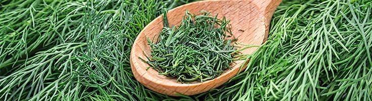 High Quality Organics Express Dill