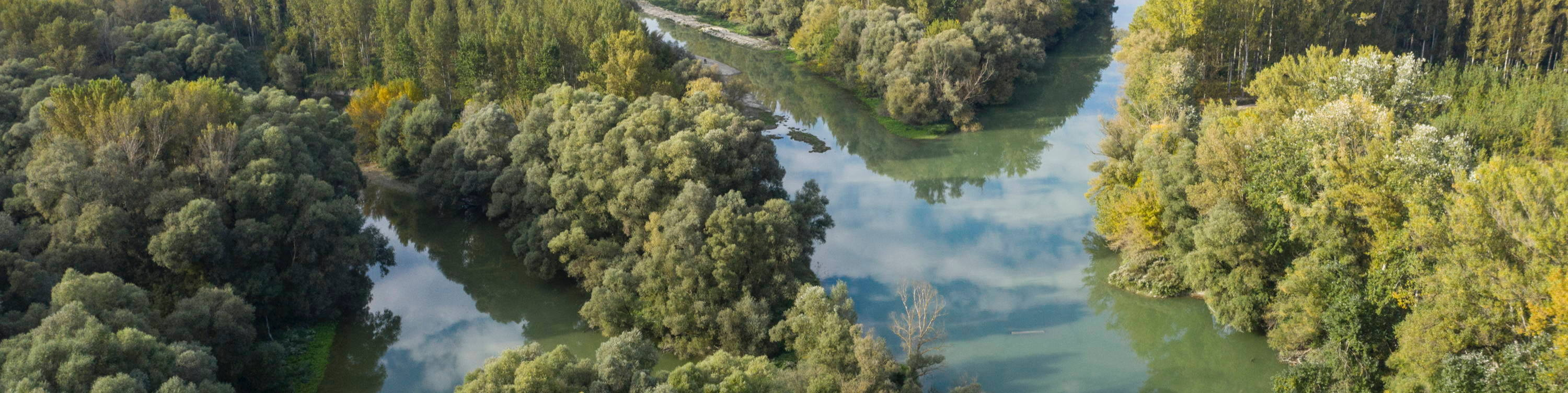 A drone image of the turquoise streams of the Danube running through native and monoculture forests