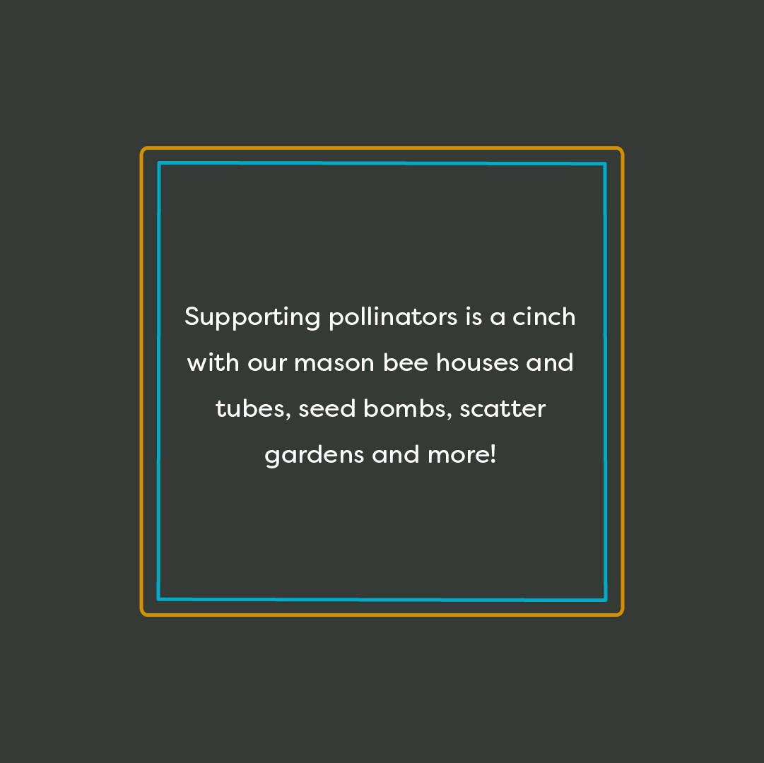 Supporting pollinators is a cinch with our mason bee houses and tubes, seed bombs, scatter gardens and more!