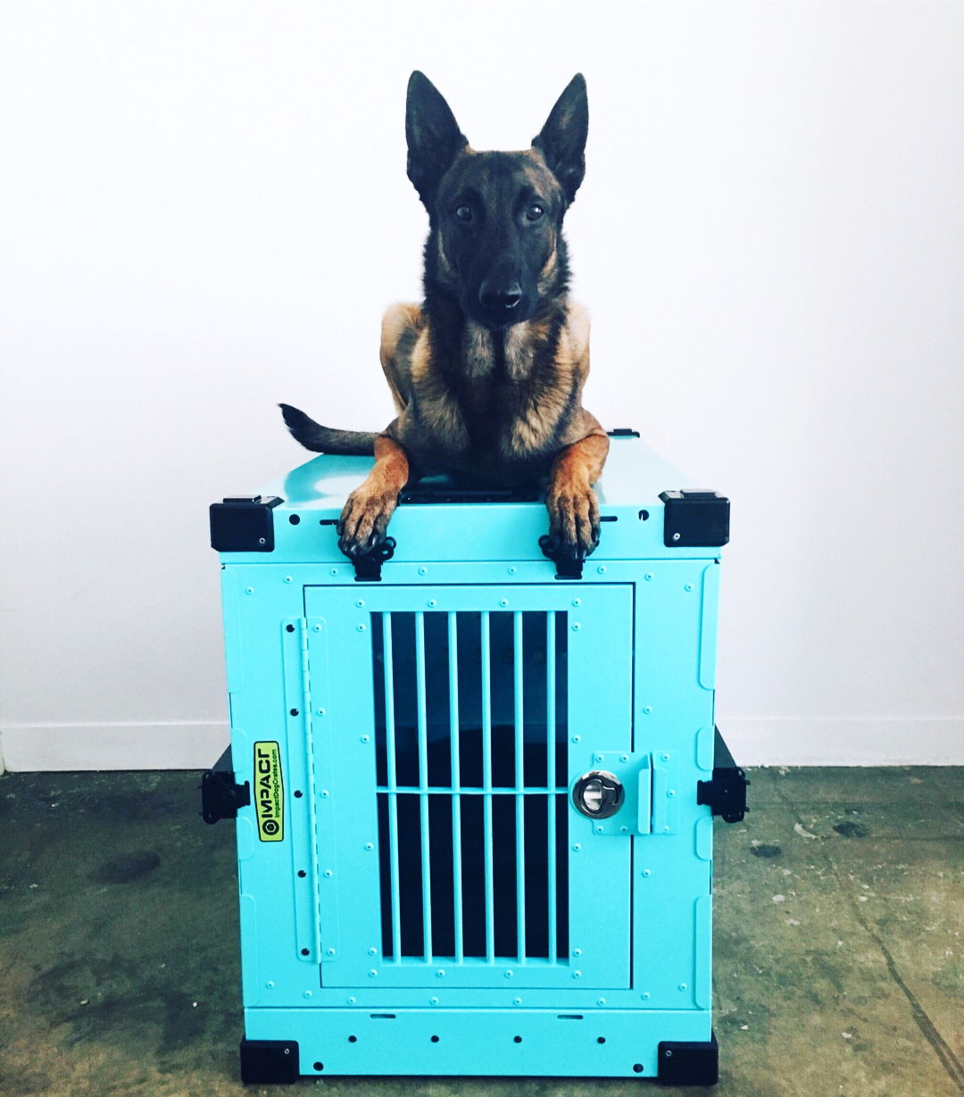 belgian malinois size 450 collapsible impact dog crate in teal