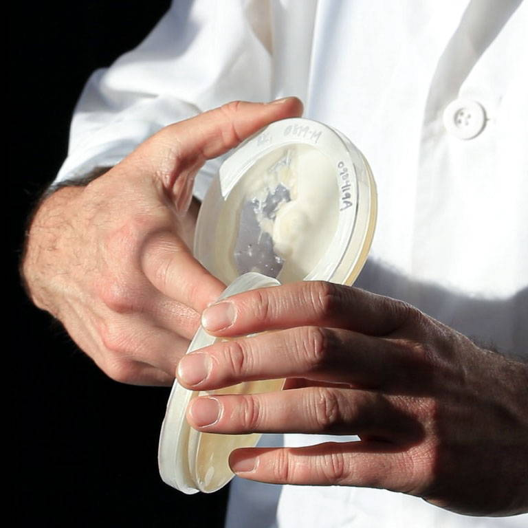 A person in a lab coat holding two petri dishes with mushroom cultures