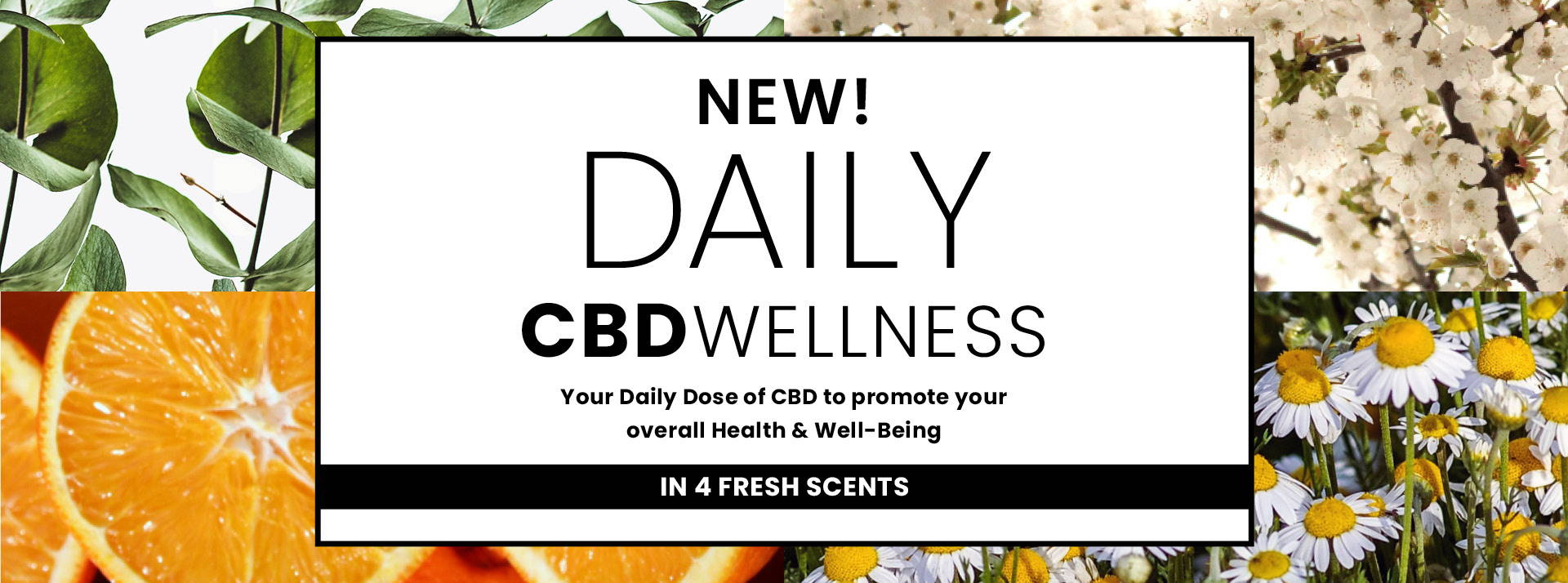 New Daily Wellness Your Daily dose of CBD to promote your overall health and well-being