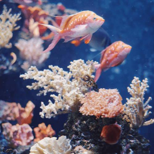 Coral Reefs Sumatra