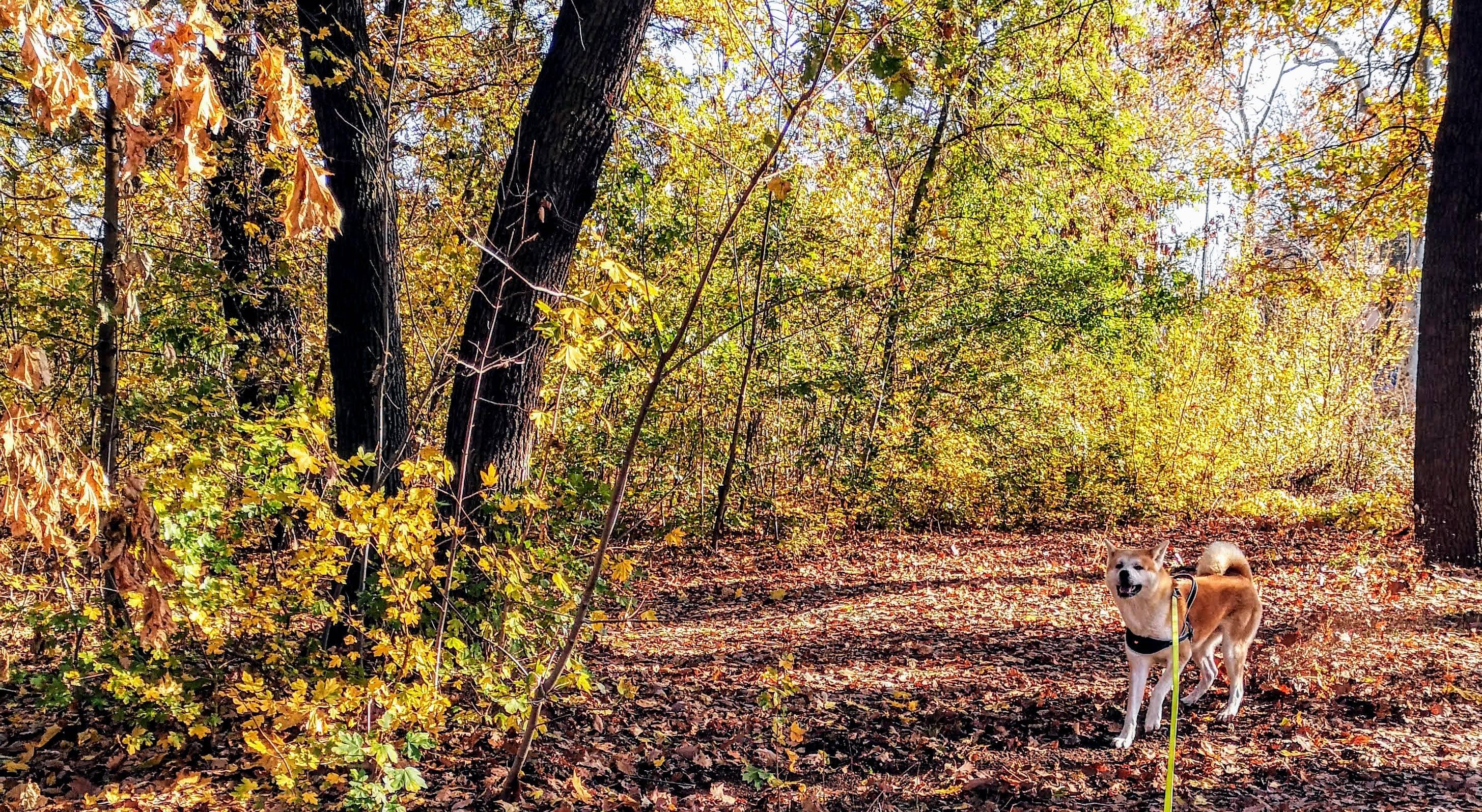 Chaussette profite des feuilles mortes