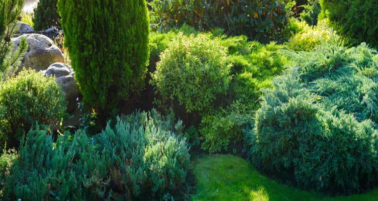 La base verde del tuo giardino