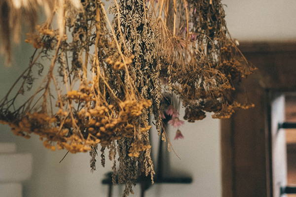 Harvesting, Drying, and Storing Herbs