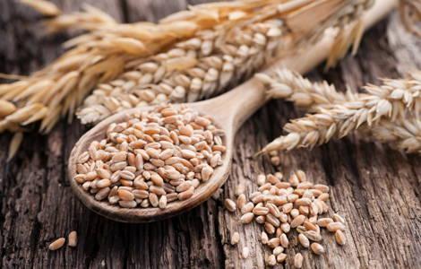 Le gluten dans le blé