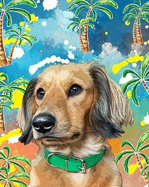 dachshund on coconut tree background