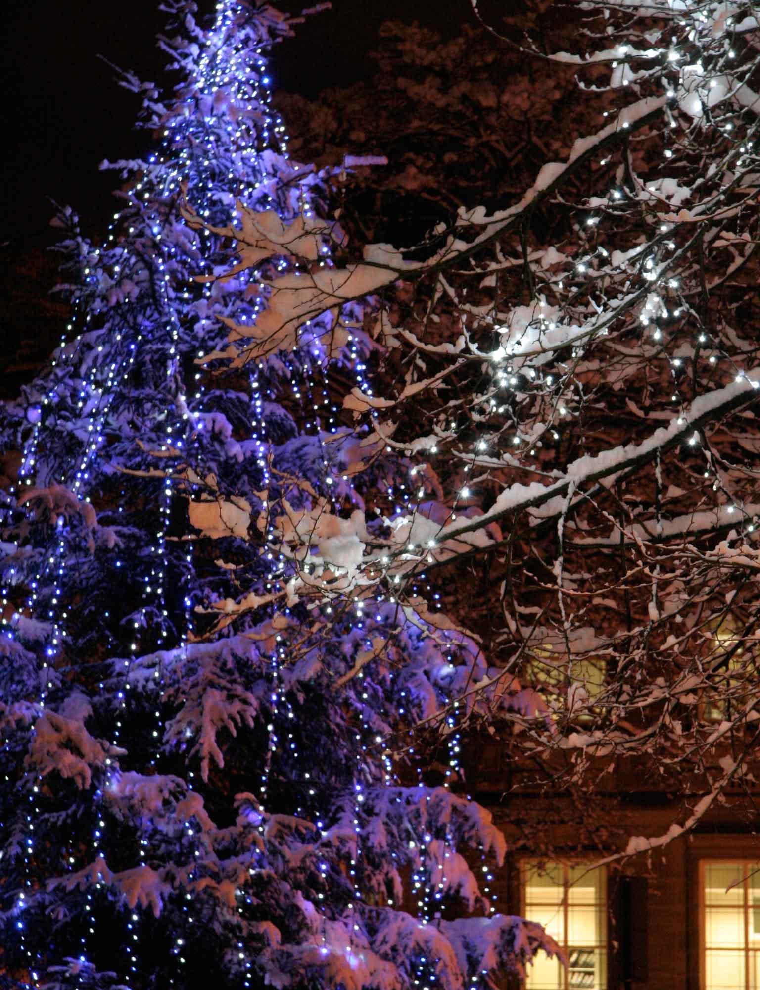 Purple Christmas Tree Lights.Christmas Tree Light Ideas Lights4fun Co Uk