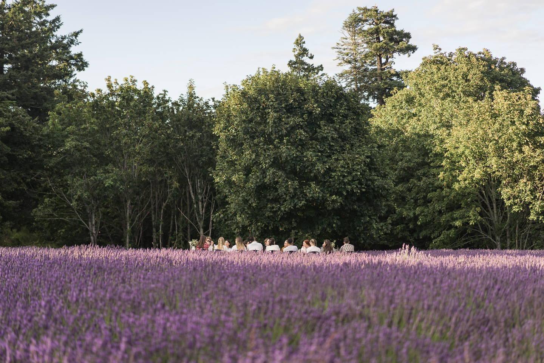 lavender field dinner