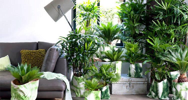Le palmier exclusif