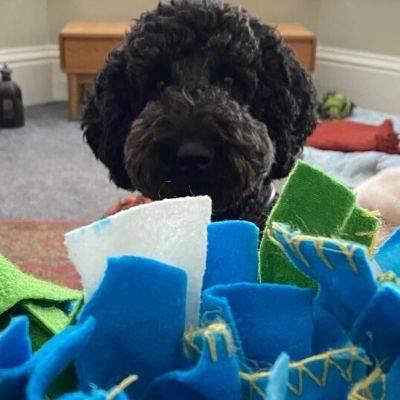 Doris The Labradoodle, Snuffle Mat, Dog Enrichment, Bone Idol Dog Food, Healthy Food for Happy Dogs, Doodle Training, Dog Training, Brighton Dog Groomer.