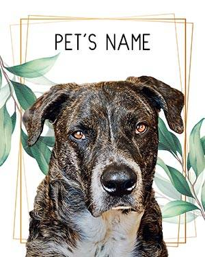 Brindle dog on gold frame and leaves background
