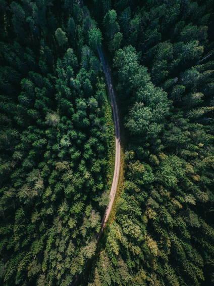 Our 1 Million Tree Goal