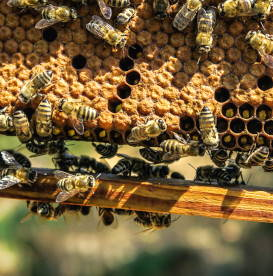 beeswax-bee-hive-ingredient-insights