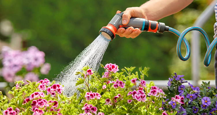 Watering During the Summer