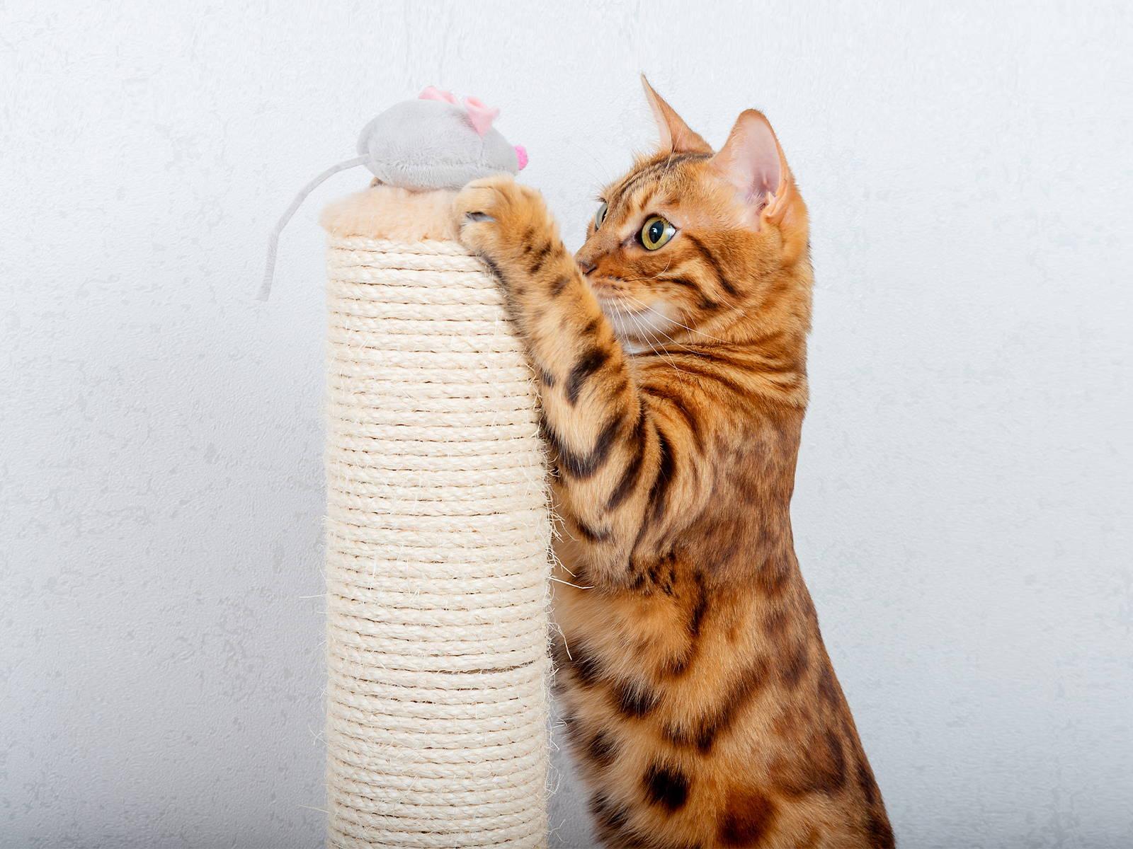 Titelbild Katze beschäftigen