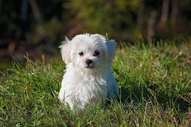 Diarrhea in Puppies: Causes, Symptoms, Treatments