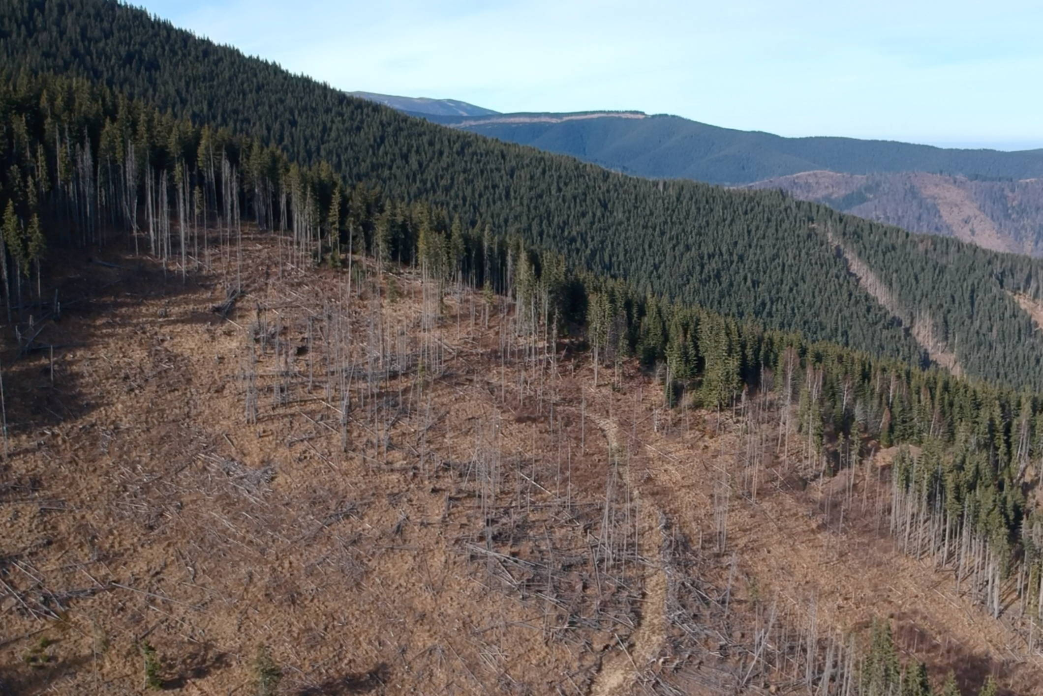 Vast forests stand out  against a foreground of clear cuts