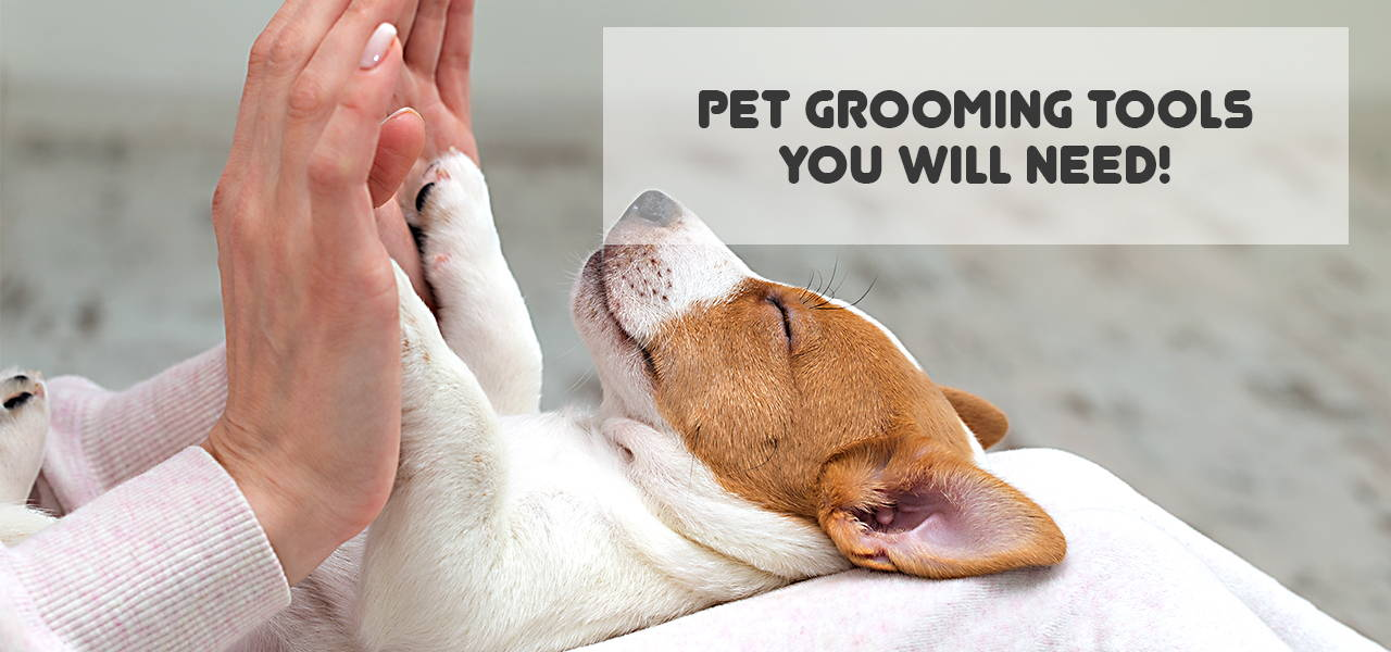 Pet grooming tools, accessories or equipment that you will need!
